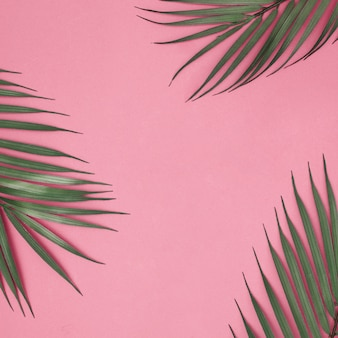 Hojas de verano sobre fondo rosa