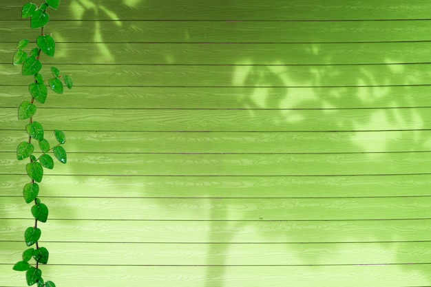 Hojas verdes del árbol de la planta y sombra de coatbuttons nature en madera verde