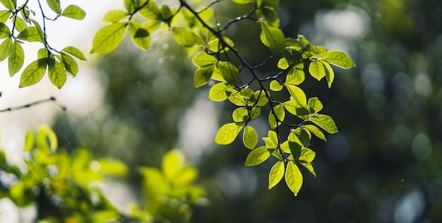 Hojas verdes brotando en la naturaleza después de la lluvia