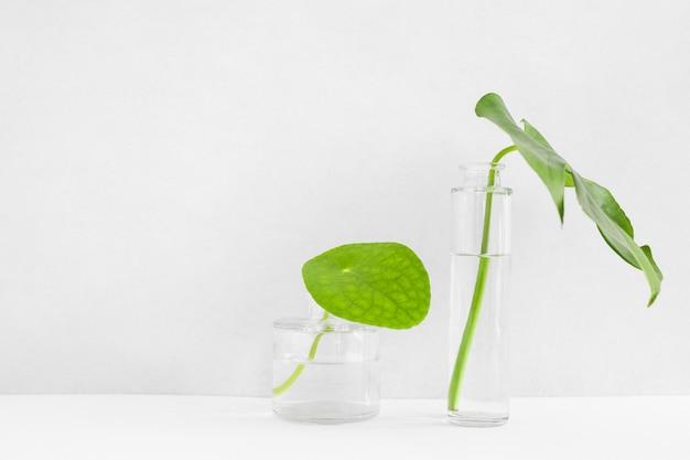 Hojas verdes en los dos diferentes floreros de vidrio transparente.