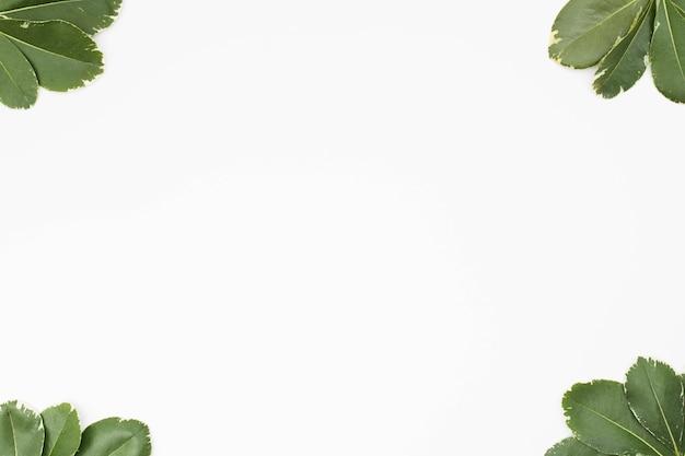 Hojas verdes en la esquina de fondo blanco.