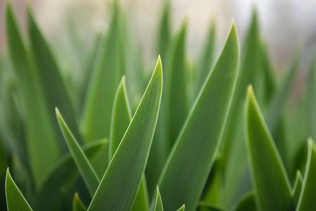 Hojas verdes de las flores. papel pintado