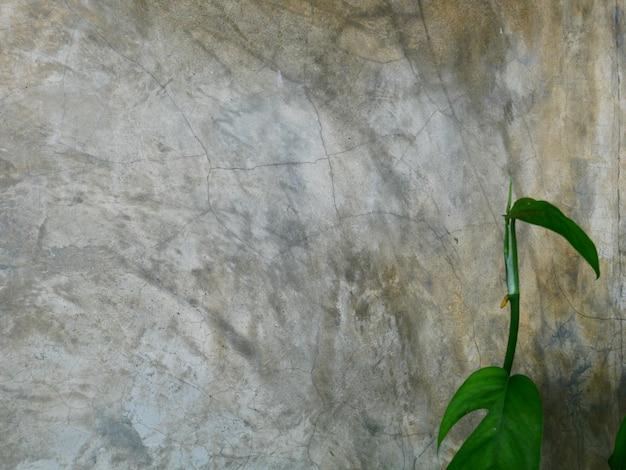 Hojas verdes y fondo de muro de hormigón