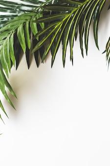 Hojas verdes frescas en el fondo blanco