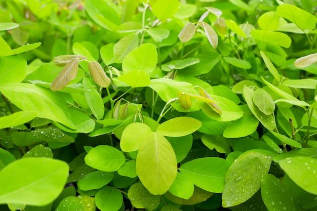 Hojas verdes frescas para el fondo