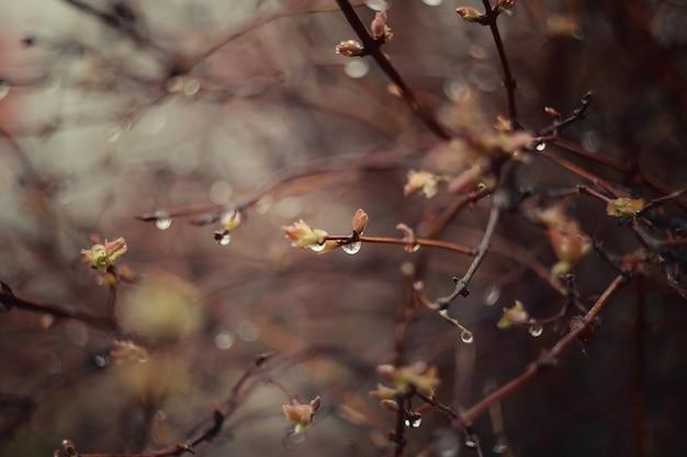 Hojas verdes frescas. gotas de lluvia en las ramas. fondo de la naturaleza.