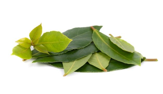 Hojas verdes frescas de la hoja de laurel aisladas en blanco. laurus aislado.