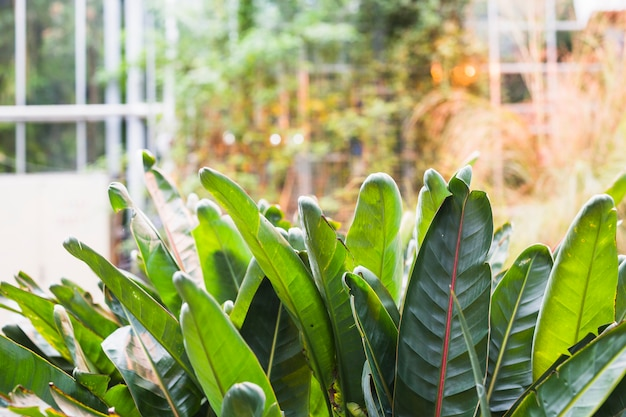 Hojas verdes frescas en el jardín botánico