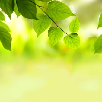 Hojas verdes frescas