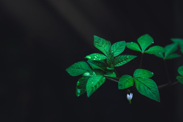 Hojas verdes con gotas de lluvia que crecen en el bosque salvaje sobre fondo oscuro