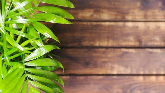 Hojas verdes y mesa de madera