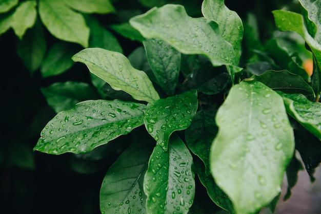 Hojas verdes mojadas con gotas de lluvia