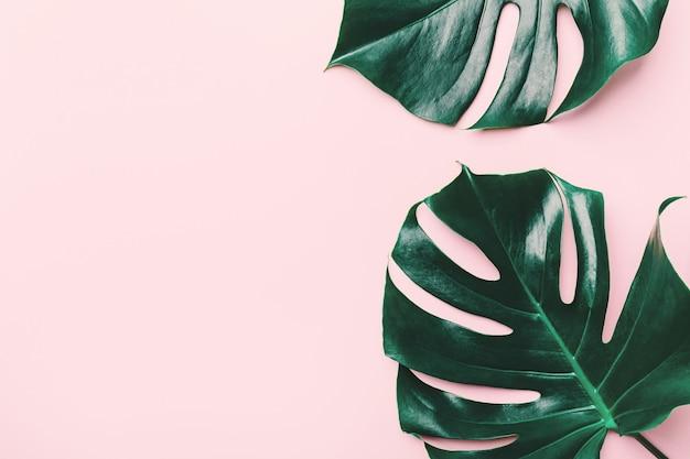 Hojas verdes de monstera en rosa.