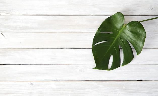 Hojas verdes de monstera sobre fondo blanco de madera