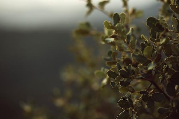 Hojas verdes naturales con fondo borroso