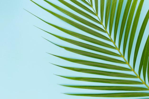 Hojas verdes de palmera en azul