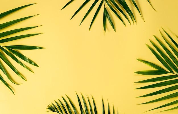 Hojas verdes de la palmera en el fondo amarillo para la maqueta