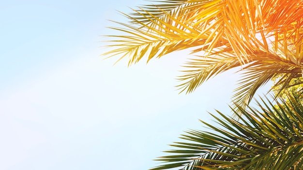 Hojas verdes de la palmera en la luz del sol contra el cielo azul