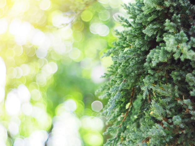 Hojas verdes de la pequeña planta en jardín vertical.