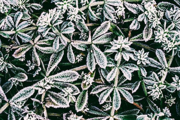 Hojas verdes de plantas cubiertas de escarcha vista superior