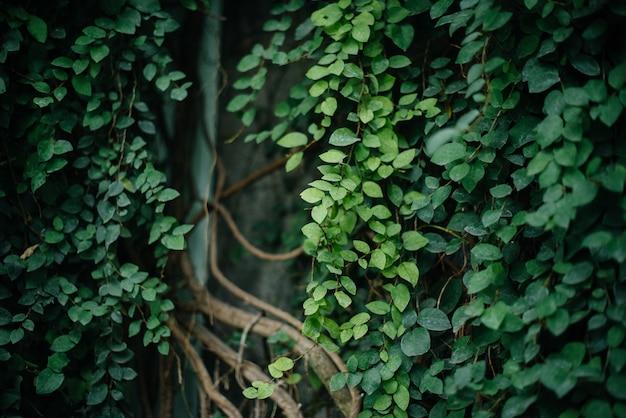 Hojas verdes de plantas tropicales