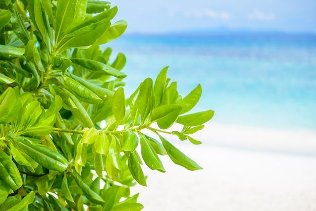 Hojas verdes con playa y mar de fondo.