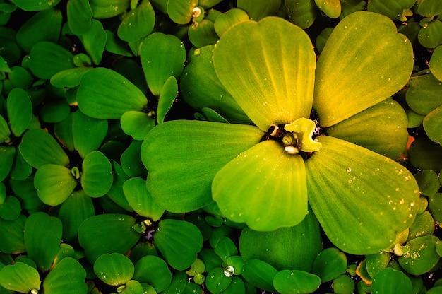 Hojas verdes primavera naturaleza al amanecer.