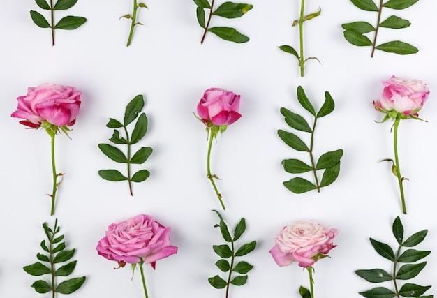 Hojas verdes y rosas rosadas dispuestas sobre fondo blanco