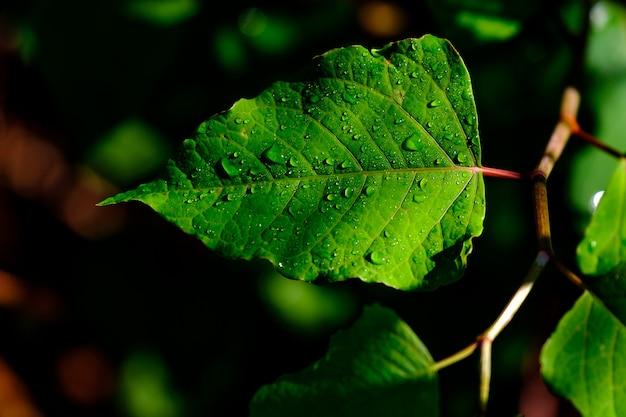 Hojas verdes silvestres con rocío sobre ellas