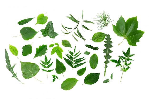 Hojas verdes sobre blanco