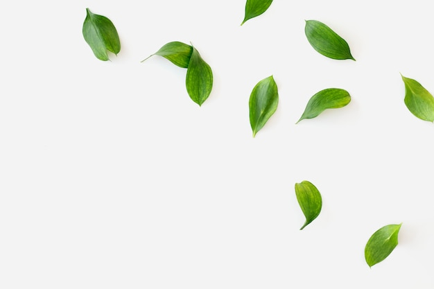 Hojas verdes sobre fondo blanco