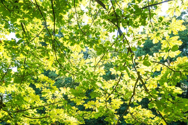 Hojas verdes sobre los fondos verdes.