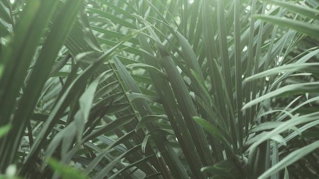 Las hojas verdes tropicales. papel pintado abstracto de la naturaleza