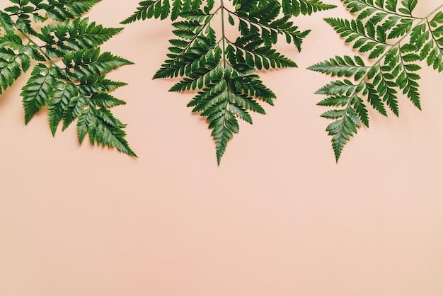Hojas verdes tropicales sobre fondo de color