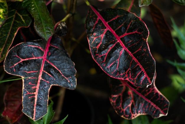 Hojas verdes tropicales sobre fondo oscuro