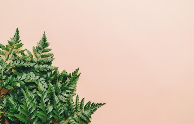 Hojas verdes tropicales