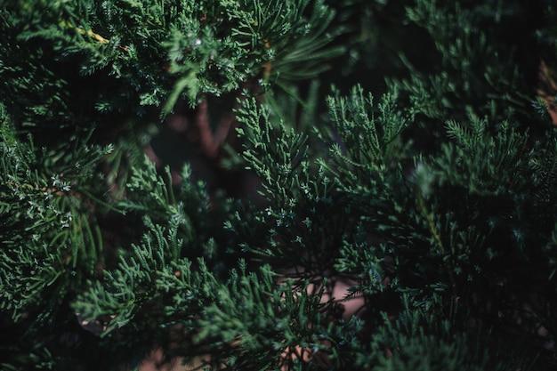Las hojas verdes
