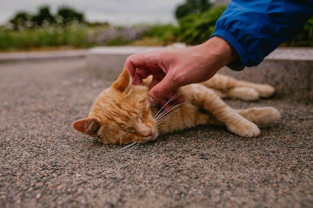 Hombre acaricia gato rojo