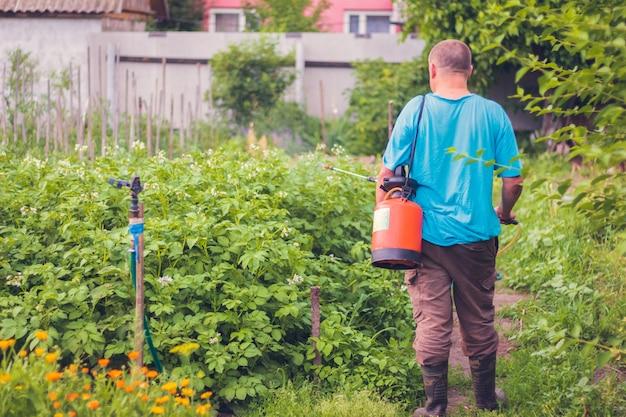 Hombre agricultor destruye insectos rociando papas