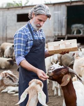Hombre alimentando animales