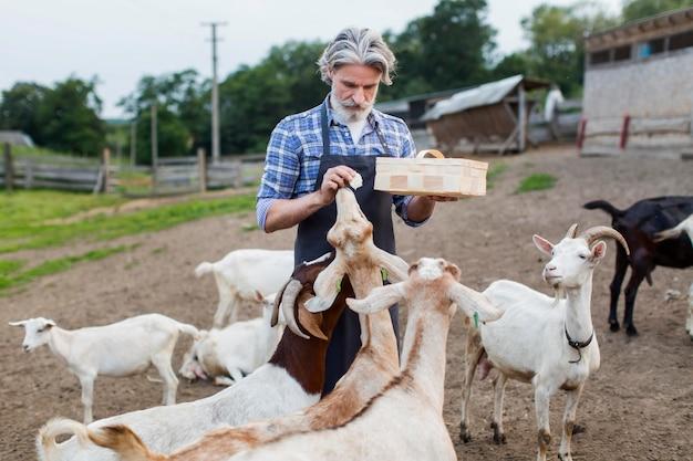 Hombre de alto ángulo alimentando cabras
