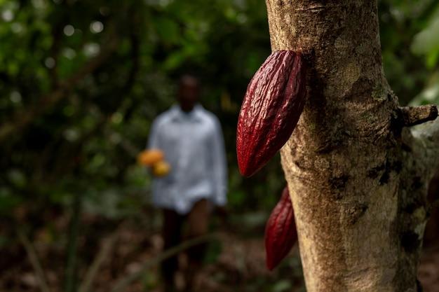 Hombre borroso y cacao en grano plano medio