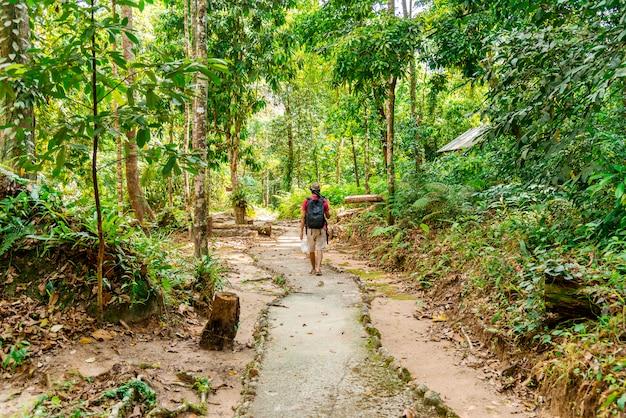 Hombre caminando en el bosque con la naturaleza la luz del sol