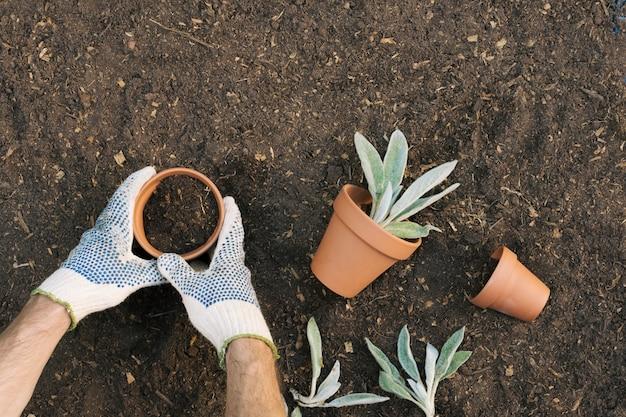 Hombre de la cosecha en guantes de plantación de plántulas