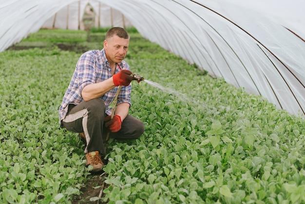 El hombre cuida las plantas en el invernadero