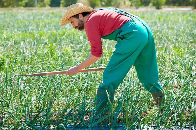 Hombre del granjero que trabaja en el huerto de cebolla con la azada