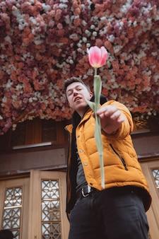 Hombre guapo tiene una flor, tulipán rosa a la novia para el día de san valentín.