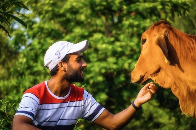 Hombre con imagen de vaca ayudando a vaca