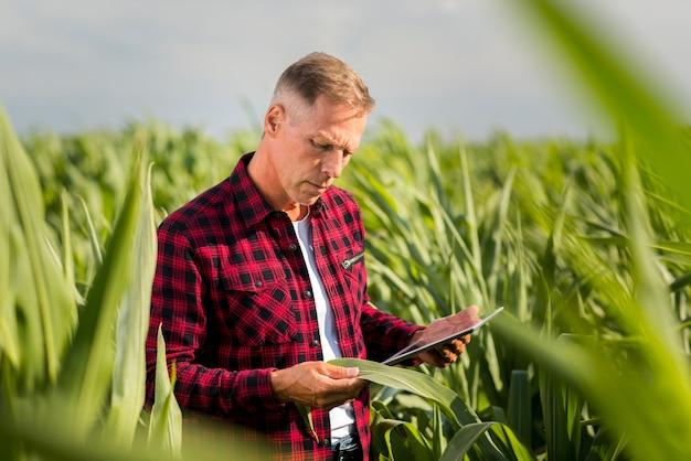 Hombre inspeccionando atentamente una hoja de maíz
