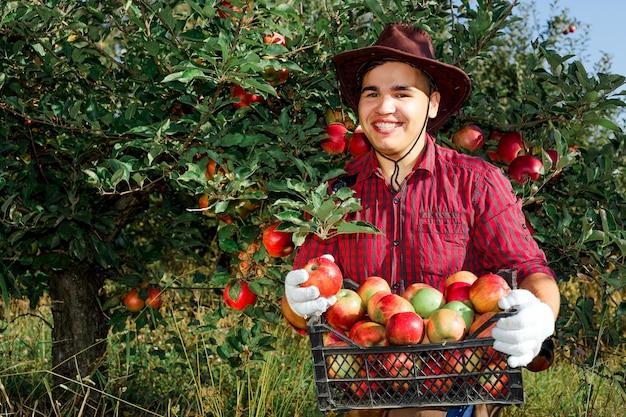Hombre jardín recoger manzanas maduras sombrero verde rojo propietario propietario trabajador propietario cosecha caja cesta